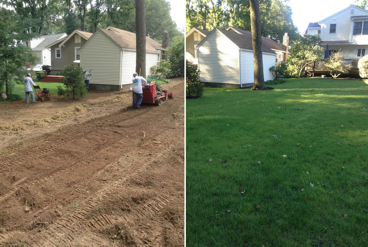 Grading of rear yard and new seed lawn installation